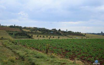 Asanyo Farm